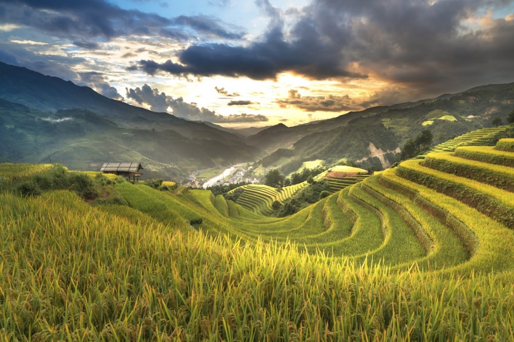 Rice Fields - Ha Giang, Vietnam