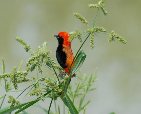 bird tanzania