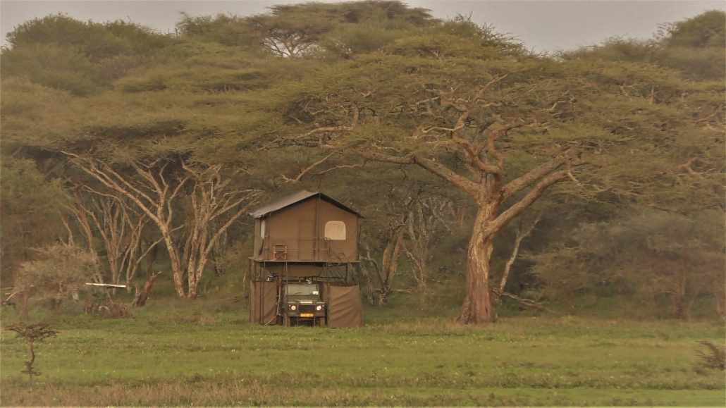 Bush Rover - Kusini