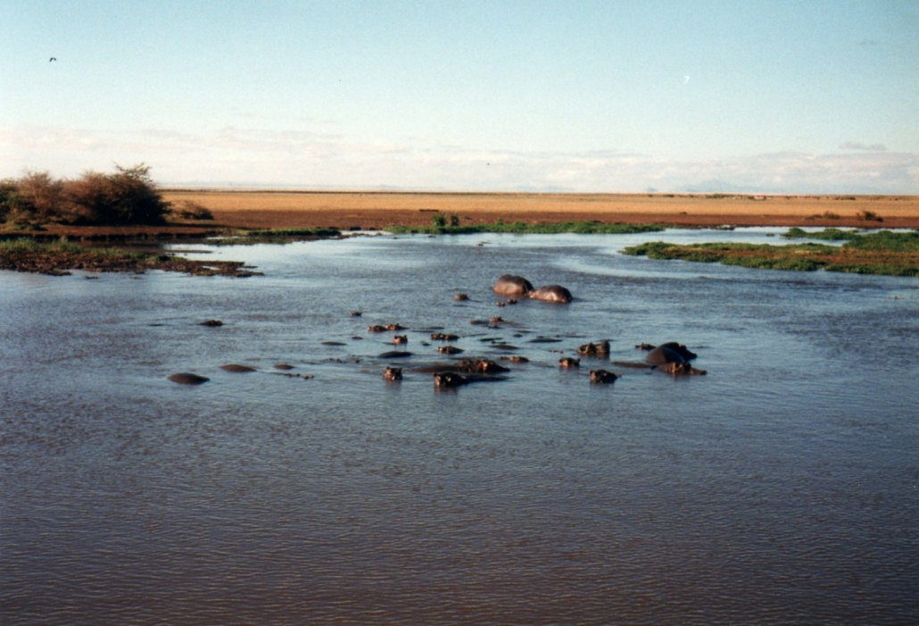 Lake Manyara National Park - Hippos