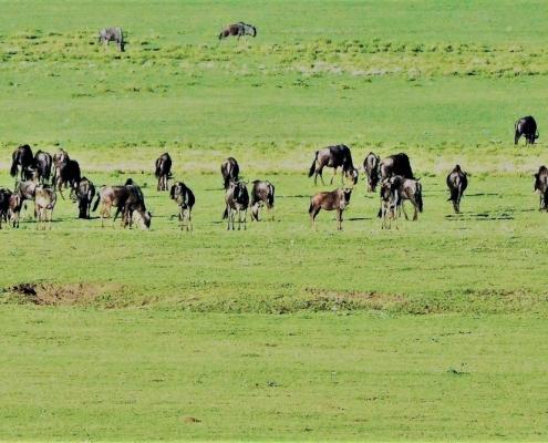 Maasai Ngornogoro